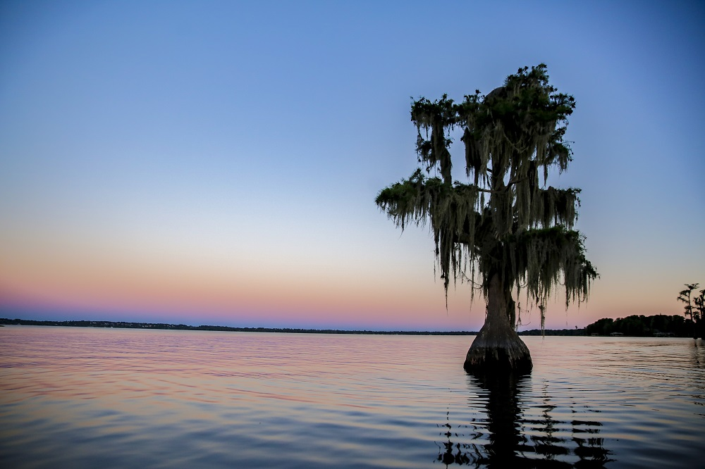 Sunset on lake, cypress tree in middle of lake