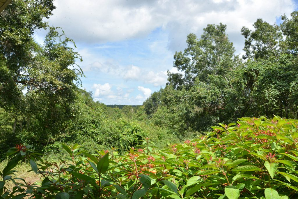 Photo of the tops of trees and scenery for Green Mountain Scenic Overlook