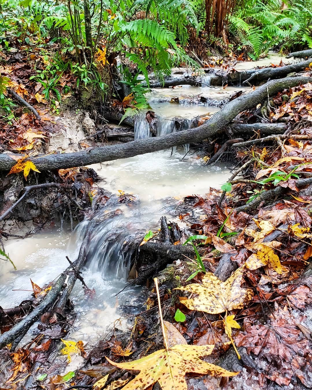 Small waterfall flowing over leaves and small branches.