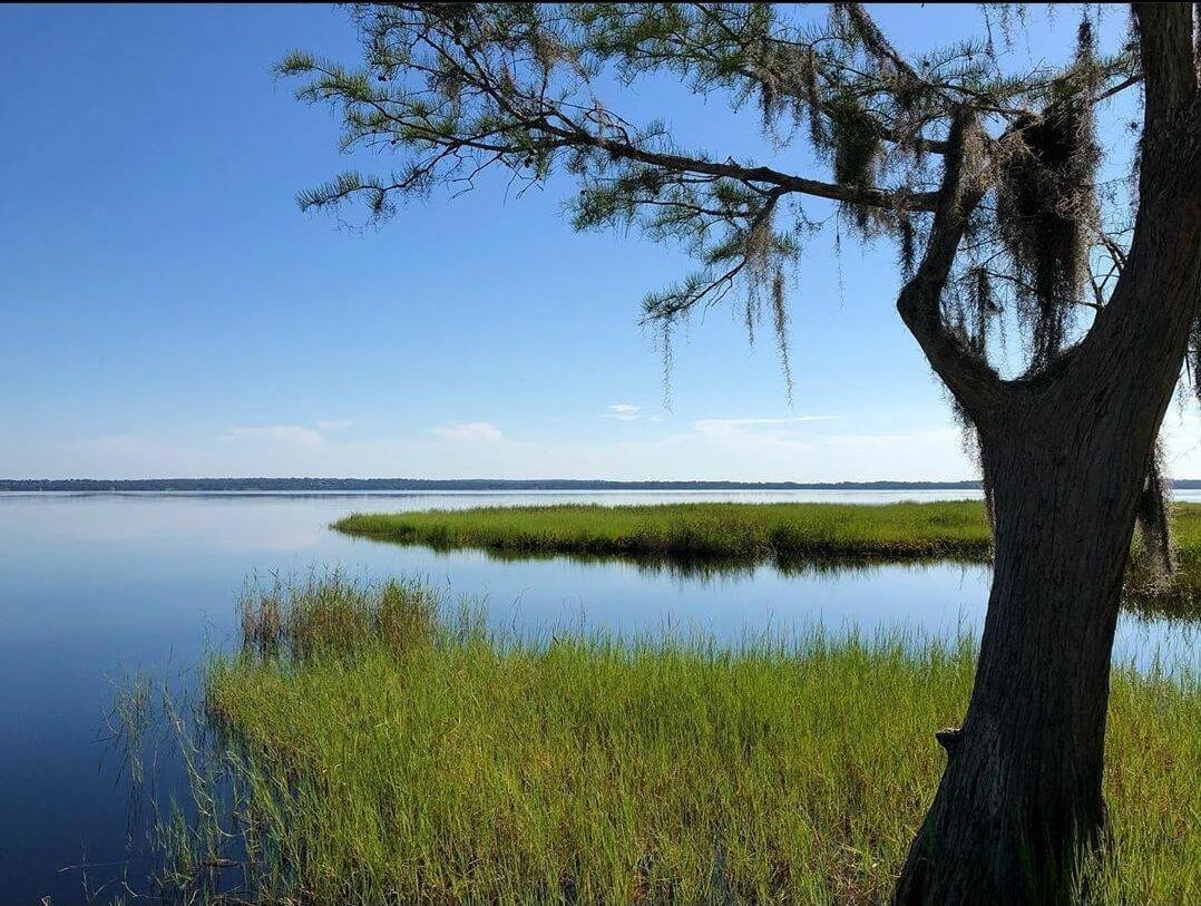 Tree and water at lake louisa