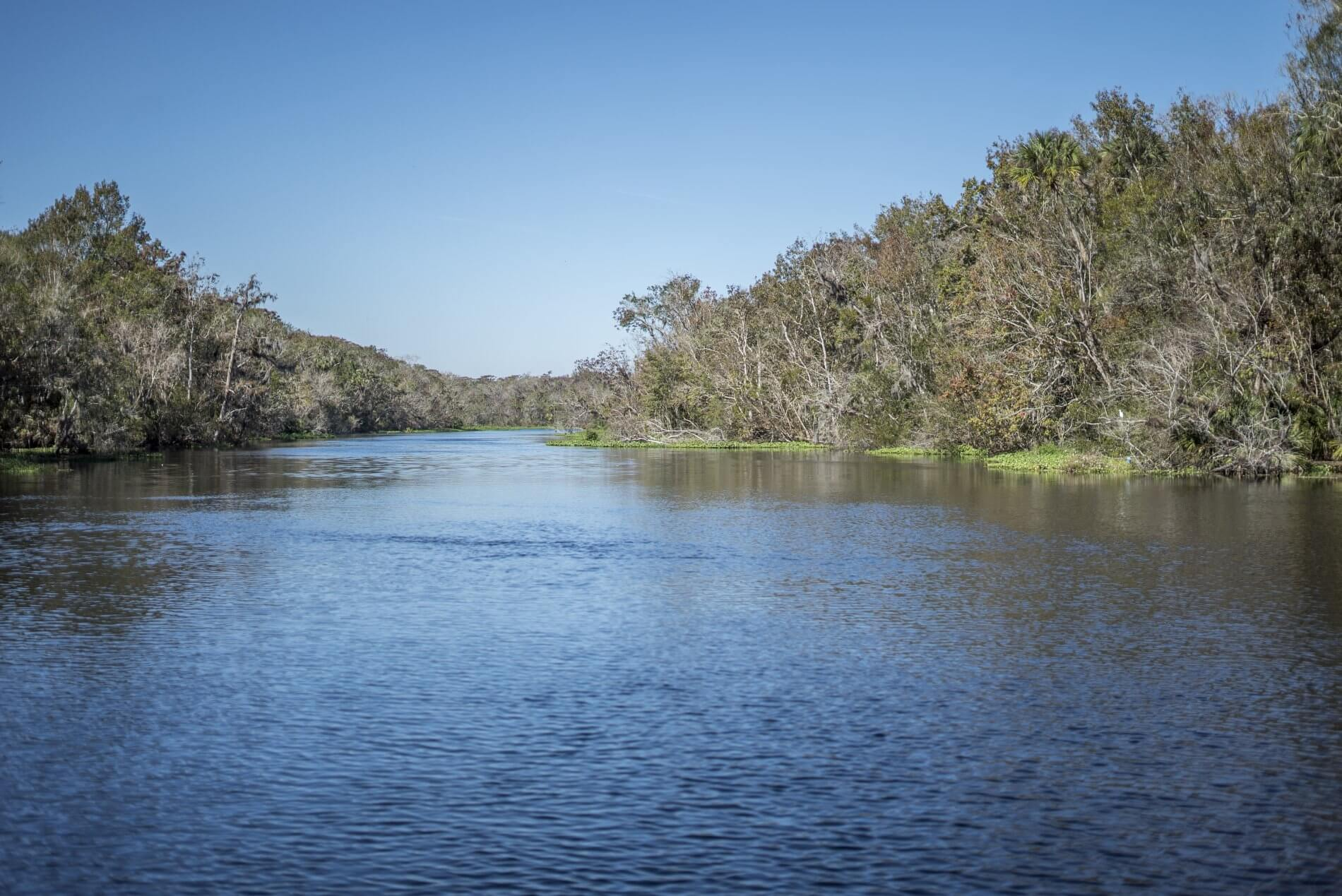 Landscape image of the St. Johns River with oak trees on both sides of the river.