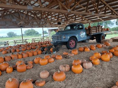 Showcase of Citrus, orange, fall, farm