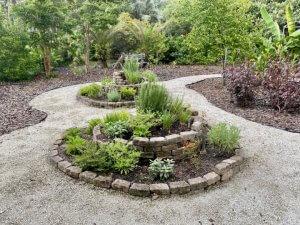 Herbs in the Edible Landscape garden.
