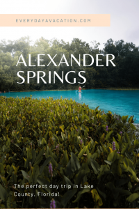 """Photo of Alexander Springs State Park with text overlay. It reads: """"Everydayavacation.com Alexander Springs. The perfect day trip in Lake County, Florida!"""""""