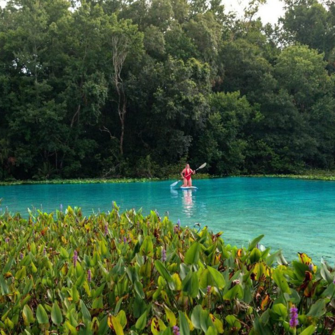 Alexander Springs: The Perfect Day Trip In Lake County, Florida