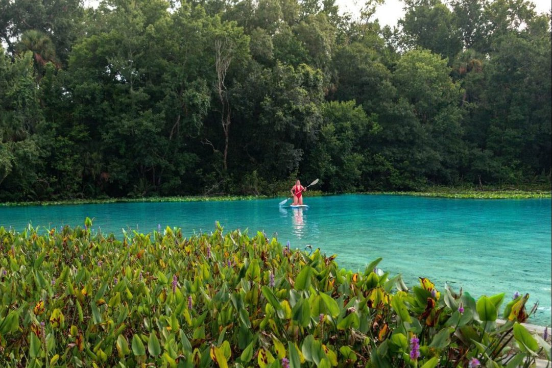 A woman paddle boards in the distance at Alexander Springs State Park.