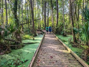 Two people are walking in the distance on a boardwalk at Flat Island Preserve.