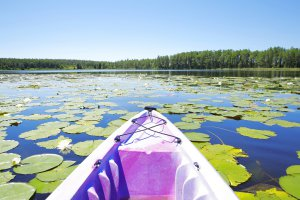 View from a kayak on Lake Louisa.