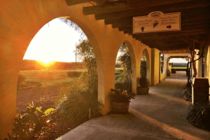 The sun shines over the trees and through an archway at the Lakeridge Winery.