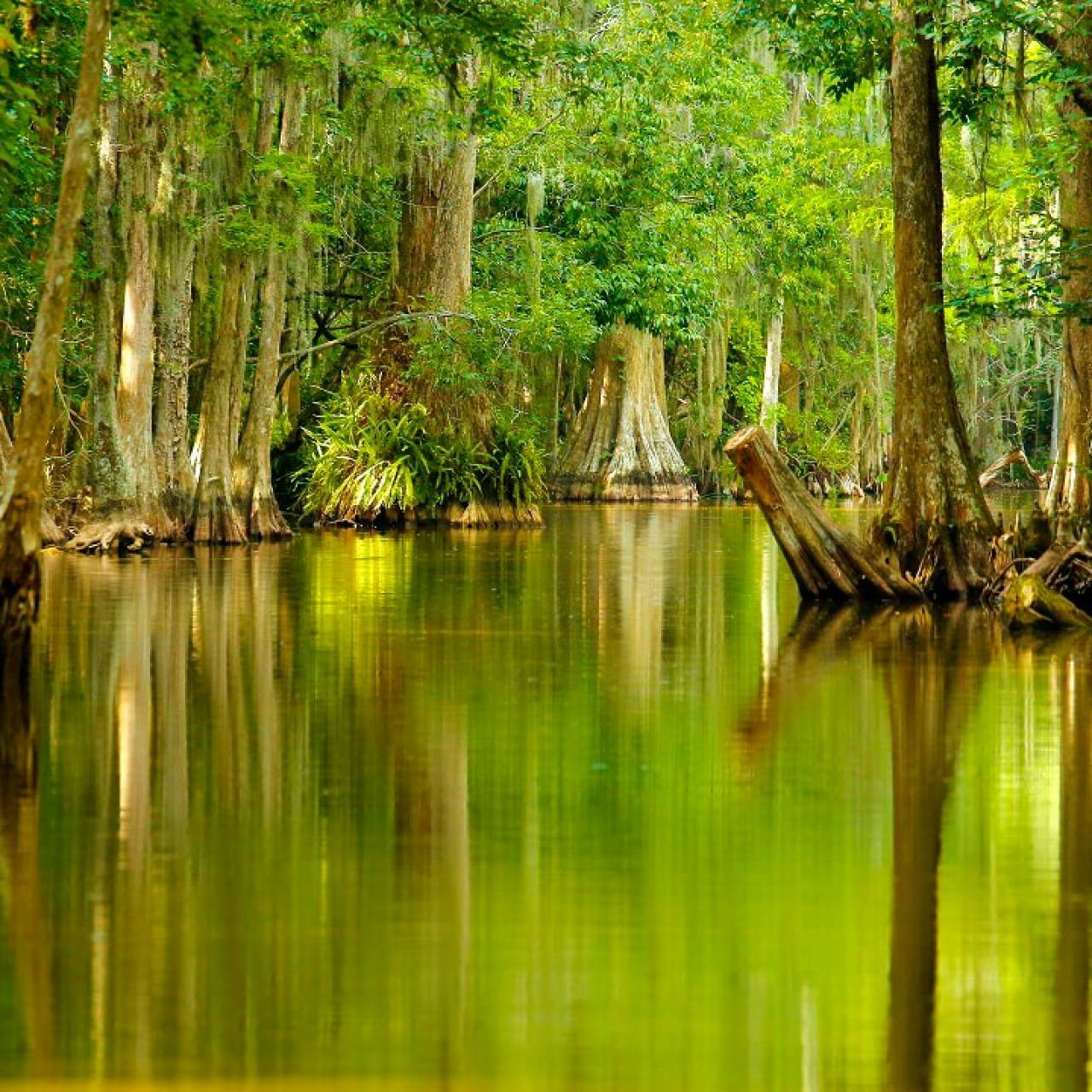 Explore Tavares, Florida