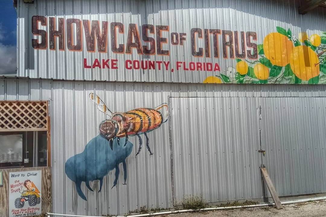 Mural on the outside of a building at Showcase of Citrus.